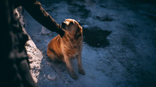 Znanstveno dokazano: psi so naravni detektorji laži (foto: unsplash)