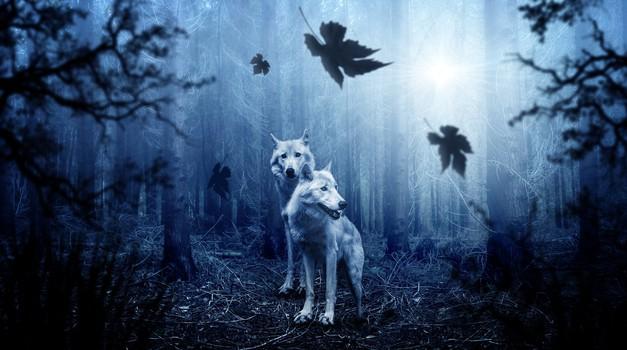 3 načini, kako odkrijemo svojega živalskega duhovnega vodnika in z njim vzpostavimo stik (foto: pixabay)