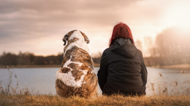 Psi nas učijo brezpogojne ljubezni (foto: pixabay)