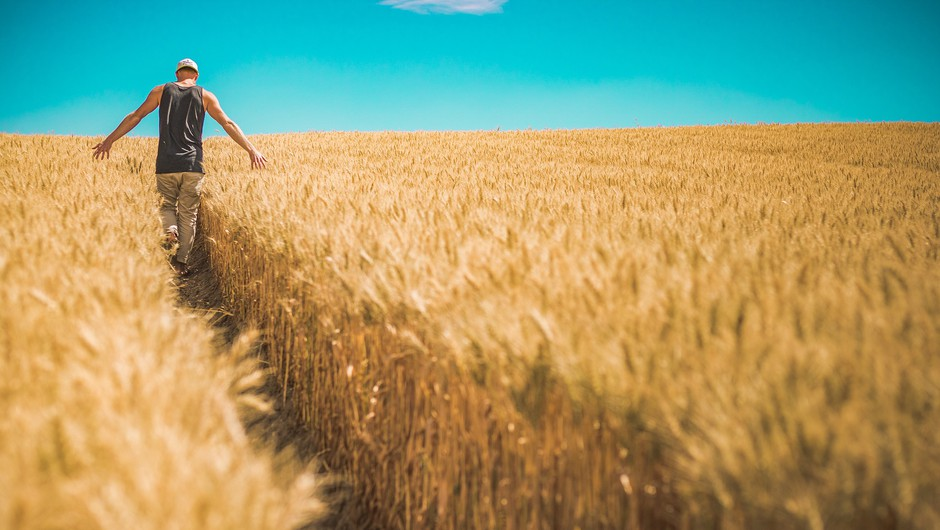 Smo alergični na gluten ali na pesticide in herbicide? (foto: pixabay)