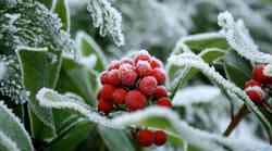 Krščanski božič je le eden od zamaskiranih poganskih praznikov, ki jih praznujemo v čast obujenih sil narave