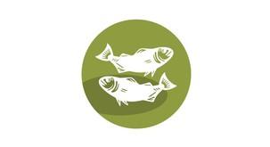 Ribi: Mini horoskop 2020 za vsak letni čas posebej