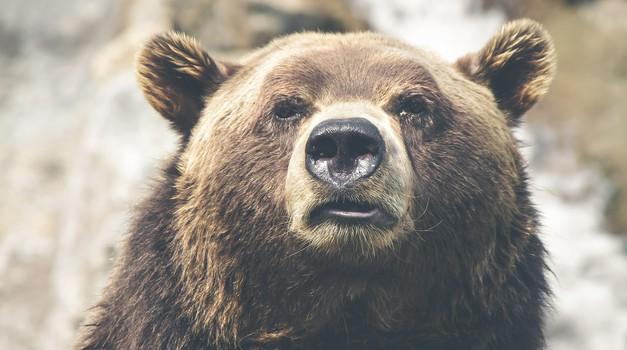 """""""Medved je naš brat, mi vsi smo ena družina"""" (foto: unsplash)"""