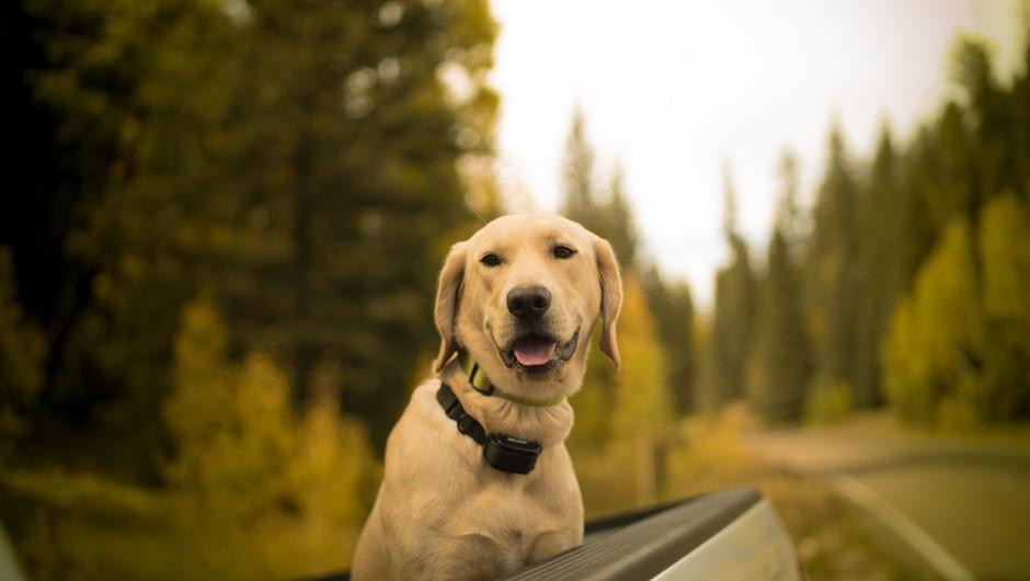 Psi lahko v človeku vzbudijo brezpogojno ljubezen (foto: unsplash)