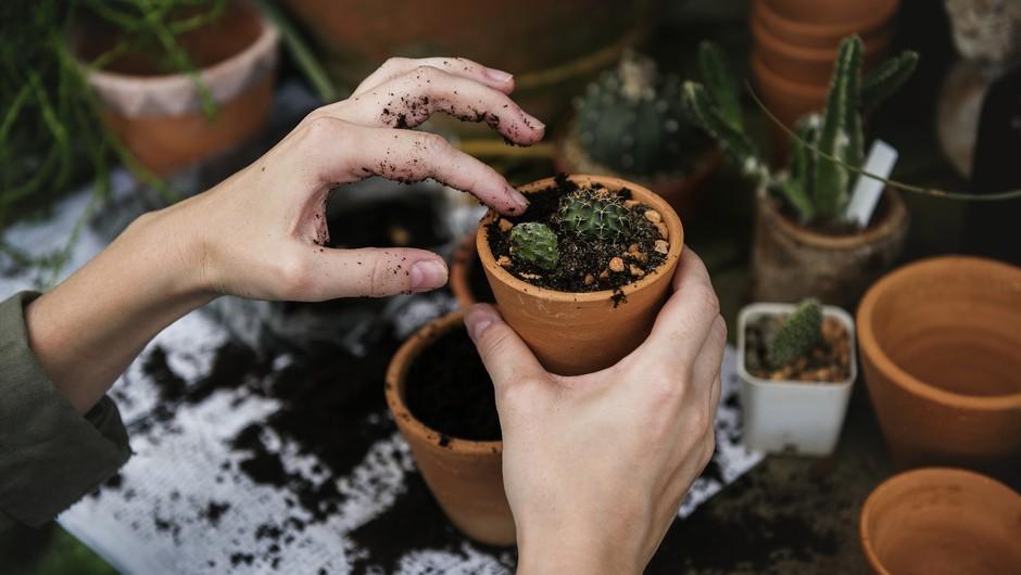 Tudi rastlinevplivajo na naše odnose (foto: pixabay)