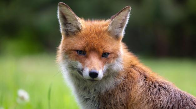 """Fotograf Božo Bradaškja: """"Žival čuti nevidno valovanje tvojih namenov."""" (foto: Božo Bradaškja)"""