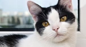 Maček Kompa - živ dokaz, da kvantne tehnologije delujejo tudi v veterini