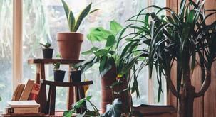 5 rastlin, ki odlično prečistijo zrak v stanovanju