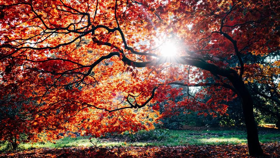 Smrt je le prehodni pojav (foto: Unsplash.com)