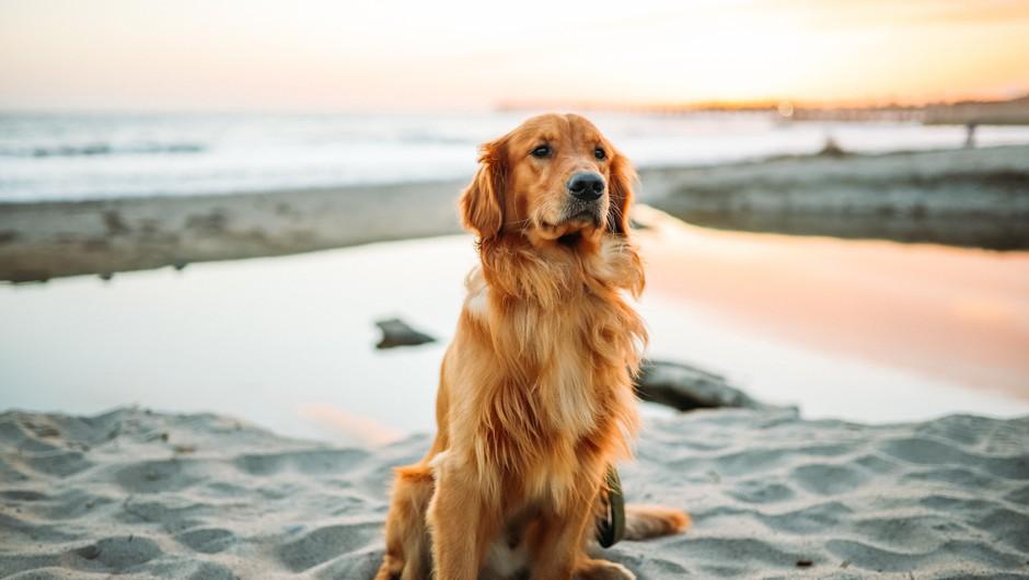 Edina napaka psov je, da je njihovo življenje prekratko (foto: Unsplash.com)