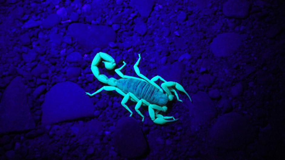 Temna plat škorpijona, ki pride včasih na plano (foto: Unsplash.com)