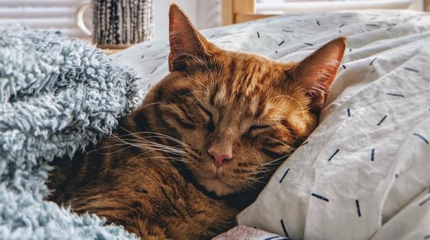 Kako dolgo lahko pustite mačko samo doma? (foto: Unsplash.com)