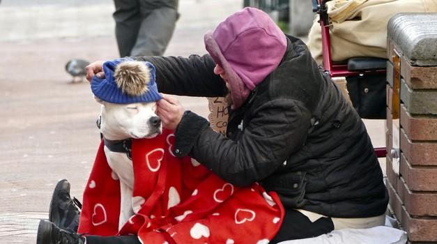 5 načinov, kako pozimi pomagati brezdomcem in živalim (foto: profimedia)