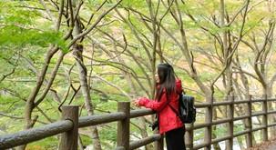 O šinrin-joku ali japonski gozdni kopeli