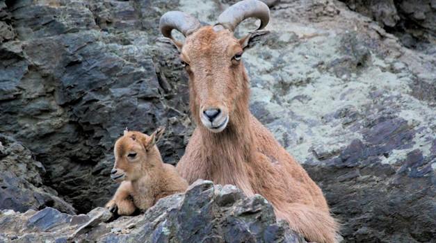 FOTO: Čudovite živalske mame (foto: unsplash)