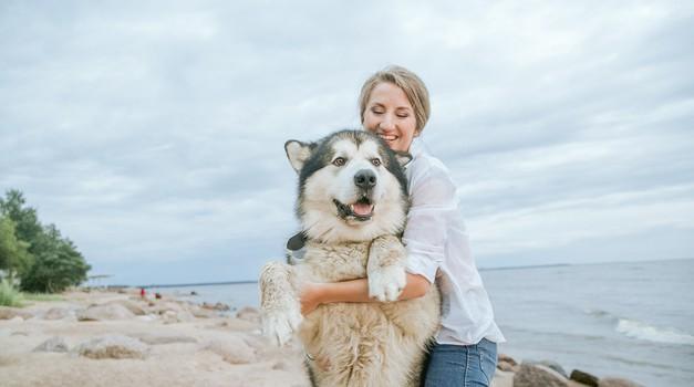 Psi in mačke kot energijski oddajnik in energijski ščit (foto: pexels)