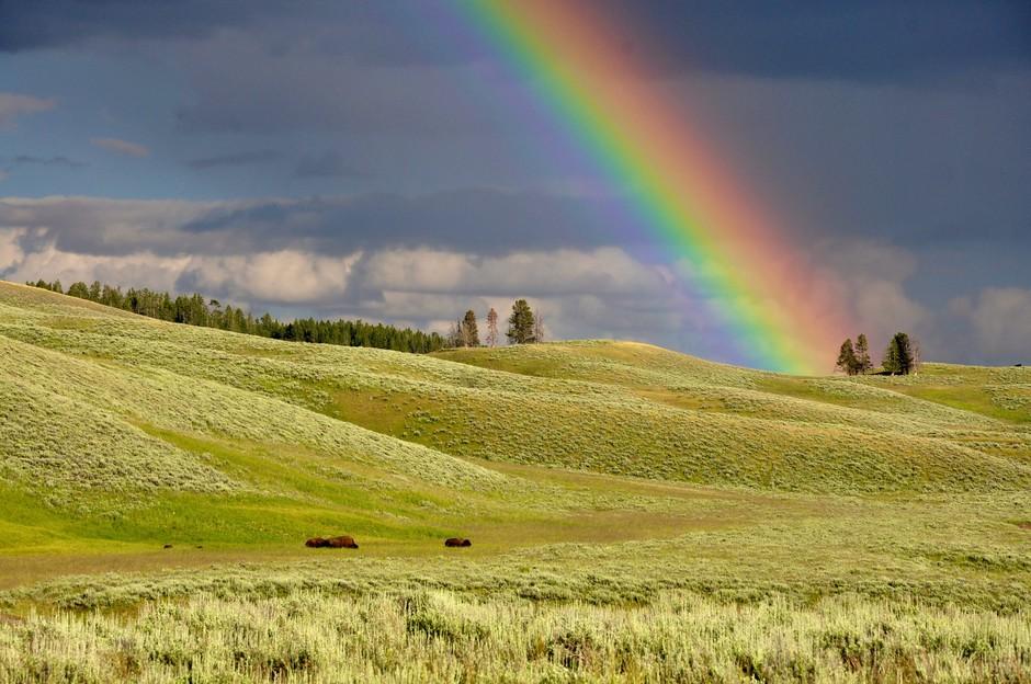 Barvna meditacija: Naravnajte se na višje frekvence z barvami (foto: Unsplash.com)