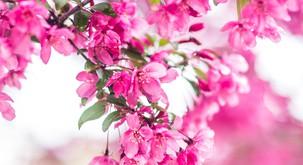 Numeroskop: Karmični teden meseca aprila bo rukal