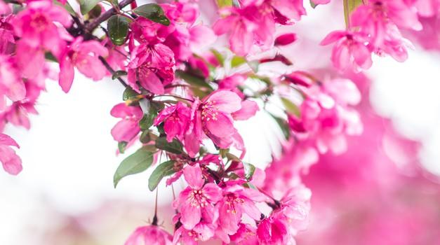 Numeroskop: Karmični teden meseca aprila bo rukal (foto: Unsplash.com)