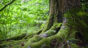 Pavel Medvešček: Drevesa v staroverskih čaščenjih