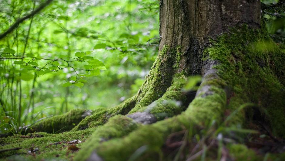 Pavel Medvešček: Drevesa v staroverskih čaščenjih (foto: Pexels)
