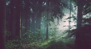 Moč gozda vam lahko spremeni življenje na bolje