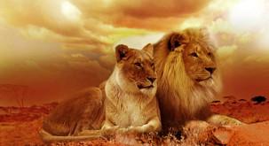 DUŠI DVOJČICI sta kot lev in levinja