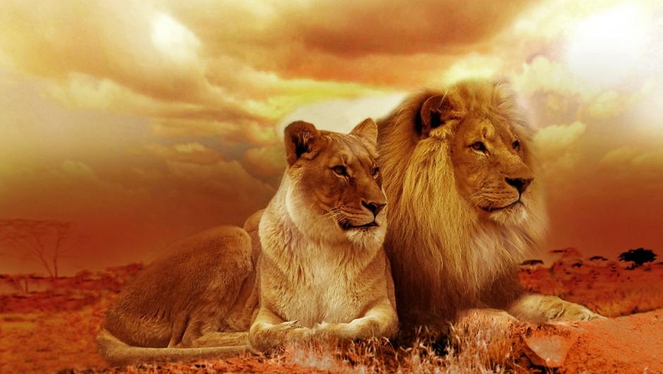 DUŠI DVOJČICI sta kot lev in levinja (foto: pixabay)