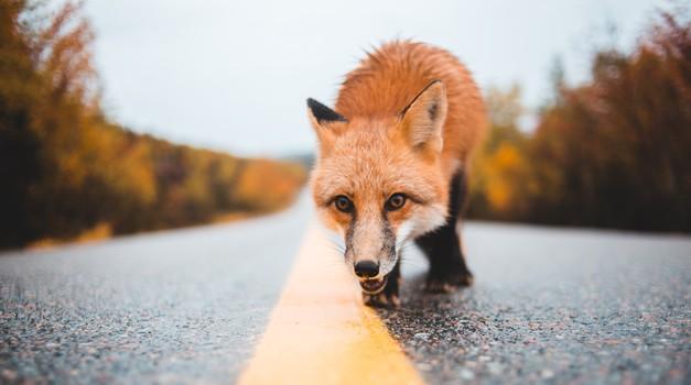 Če na poti srečujete te živali, prejemate pomembna sporočila (foto: Pexels)