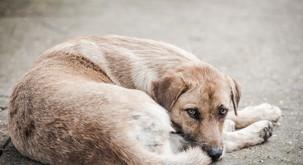Na postaji podzemne slekel majico in z njo oblekel psa, ki je premražen ležal na tleh (video)