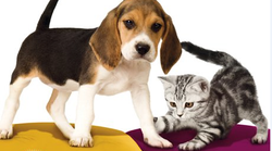 Ljubitelji živali – se spomnite, kdo je zmagal lani?