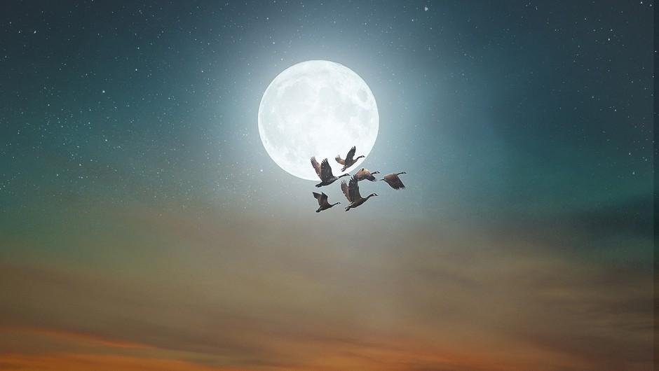 Današnja polna luna je zelo MOČNA (in nosi s seboj tudi zdravilno moč) (foto: pixabay)