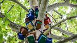 Kranjski šolarji izdelali ptičje valilnice, da bodo ptice lažje preživele zimo