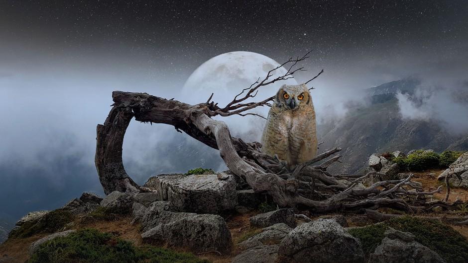 Vesolje ima v teh dneh žur, polna luna pa prinaša presenečenja (foto: pixabay)
