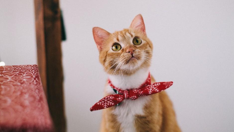 Vsaka mačka pride z razlogom (foto: pexels)
