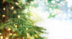 Zakaj je dobro, da letos kupite okrasno drevesce iz slovenskih gozdov