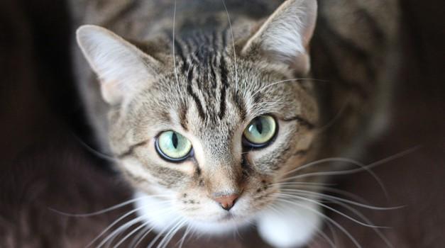 Mačka si izbere lastnika glede na njegovo energijo (foto: pexels)