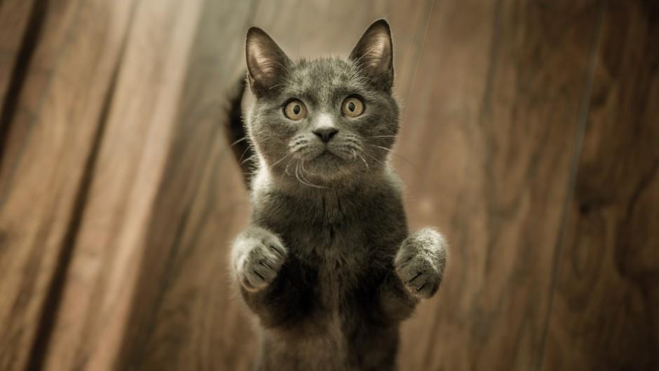 MAČKE: 9 zabavnih dejstev o naših mačjih spremljevalkah (foto: pexels)