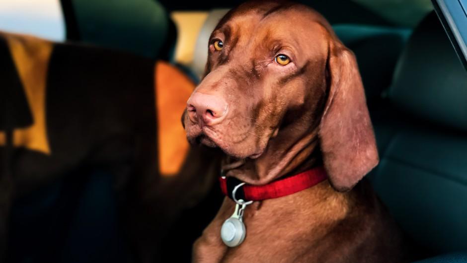 Znanstveno dokazano: psi so naravni detektorji laži (foto: pexels)