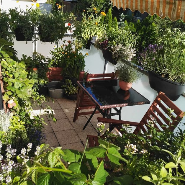 SREČA NA BALKONU - delite jo z nami! (foto: balkonova_zahrada)