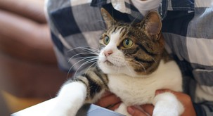 MAČKE: 9 zabavnih dejstev o naših mačjih spremljevalkah