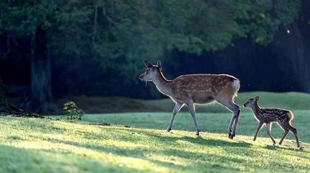 """Pater Karel Gržan: """"Živali so angelska bitja in srne so na mojem vrtu dobrodošle."""" (foto: pixabay)"""