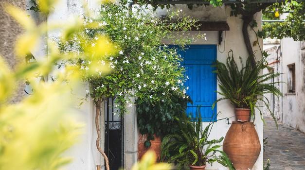 10 čudovitih zunanjih rastlin, s katerimi si polepšajte balkon, teraso ali vhod v stanovanje (foto: pexels)