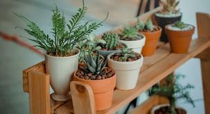 Kako lahko sobne rastline vplivajo na vaše duševno zdravje?