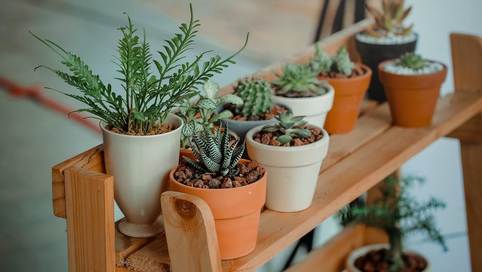Kako lahko sobne rastline vplivajo na vaše duševno zdravje? (foto: pexels)