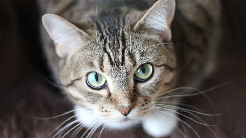 Ali mačke in psi vidijo duhove? (foto: pexels)