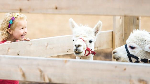 Zakaj otrok NE vodimo v živalski vrt (foto: pixabay)