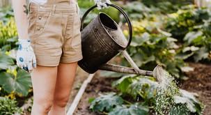 BIODINAMIČNO VRTNARJENJE: Delo na vrtu junija in julija (z Zeliščnim vrtom Majnika)