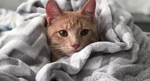 20 znakov, da ste zelo podobni mački