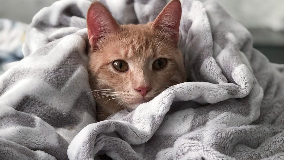 20 znakov, da ste zelo podobni mački (foto: pexels)